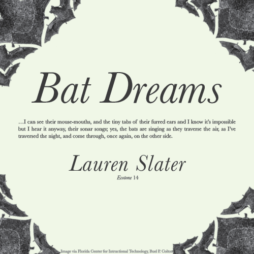 Bat Dreams Digital Broadside Molinary